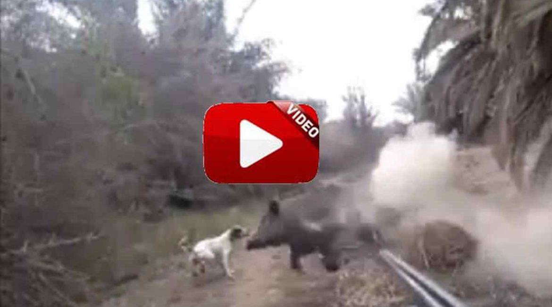 Dispara a un jabalí y a punto está de alcanzar a su perro