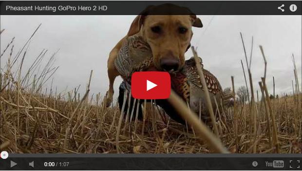 La caza del faisán