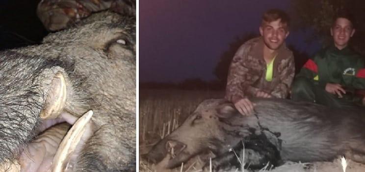 Dos hermanos de 14 y 18 años cazan un magnífico jabalí con escopeta en una espera por daños