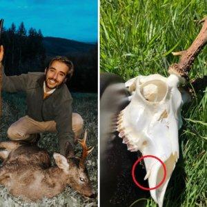 Cazan en Galicia un esquivo corzo que guardaba una sorpresa