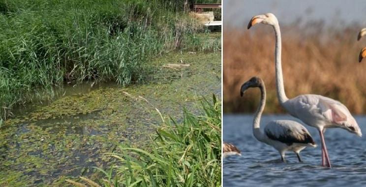 Mueren 500 aves en La Albufera por culpa de los ecologistas, según los agricultores