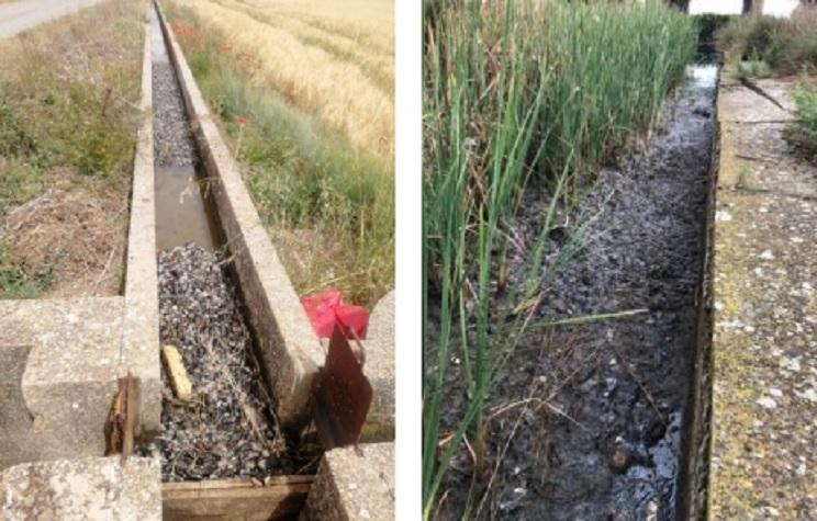 Aparecen miles de topillos muertos en varias acequias de Palencia