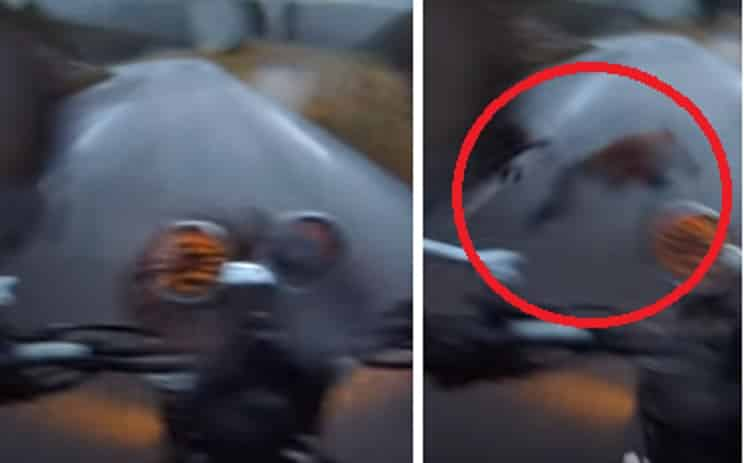 Una moto se estampa contra un jabalí y lo graba