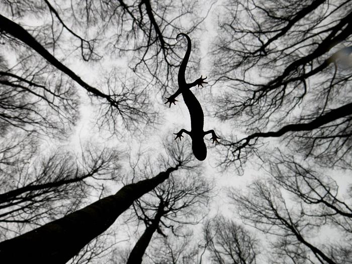 Foto: Edwin Giesbers.