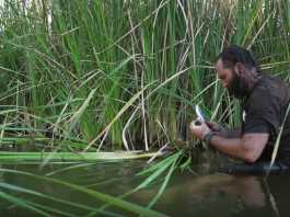 Supervivencia Como encontrar comida junto a un rio o lago