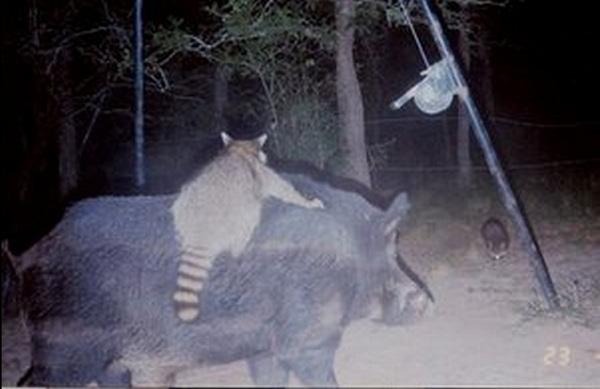 Los auténticos Timón y Pumba / Foto: Hilarious Talking Deer Recaps His Final Moments