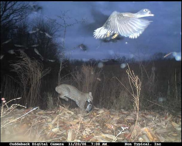 Foto: forums.bowsite.com