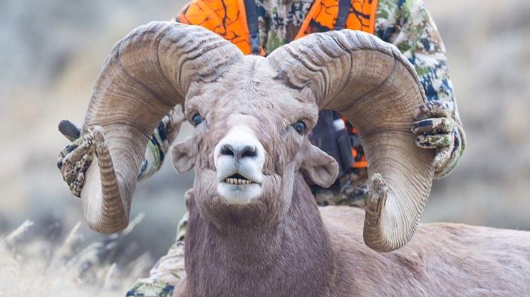 Un estudiante caza el récord del mundo de carnero de las rocosas