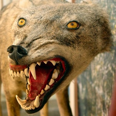 Trabajos de taxidermia (o animales disecados) que quedaron horribles 09