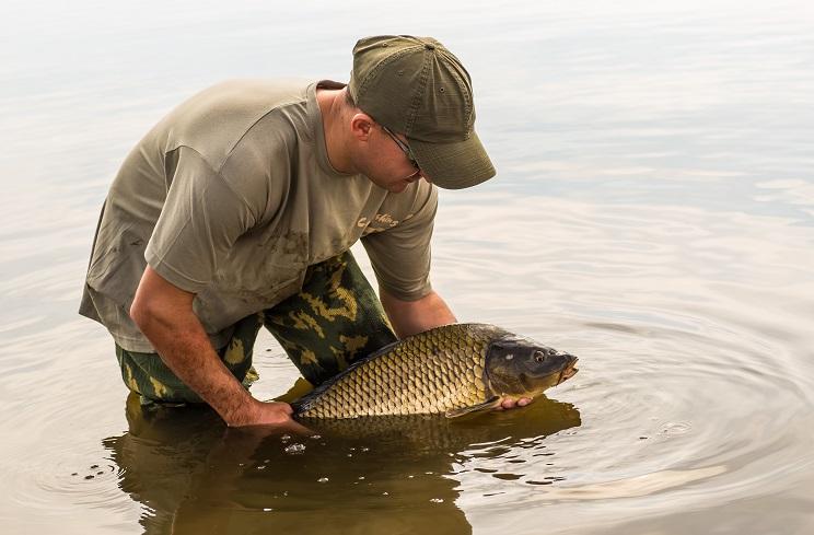 Un pescador devuelve una carpa a su medio. / Shutterstock