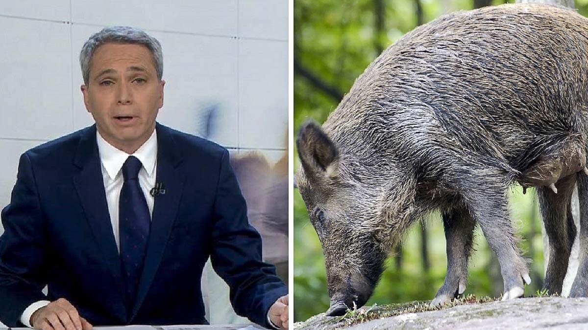 «No se quiere bajar la guarra», el día que Vicente Vallés habló de jabalíes por error y se volvió viral