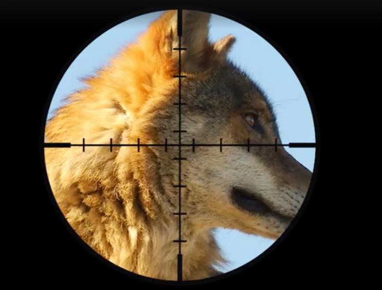 Las redes claman contra WWF por publicar un vídeo demagógico sobre el lobo