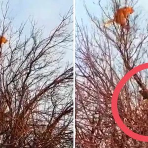 Un gato sube a un árbol huyendo de dos perros de caza, lo que sucede después nadie lo esperaba
