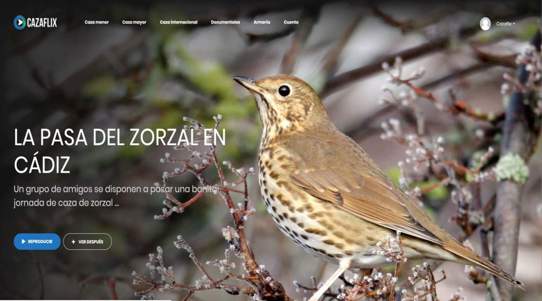 Hoy, gratis en Cazaflix, La pasa del zorzal en Cádiz