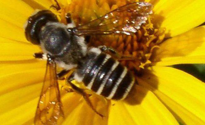 Un avión obligado a dar la vuelta por una abeja