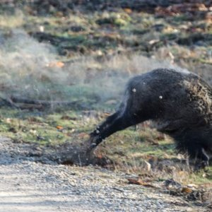 Una bala atraviesa a un jabalí y mata a un cazador en Gerona