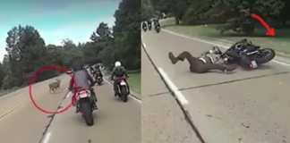 accidente ciervo moto