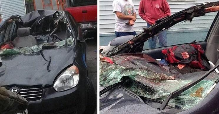 Este es uno de los accidentes con fauna más impactantes que has visto