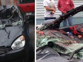 accidente con fauna