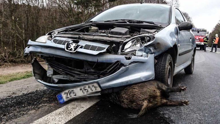 Imagen de un accidente de tráfico con un jabalí. @Shutterstock