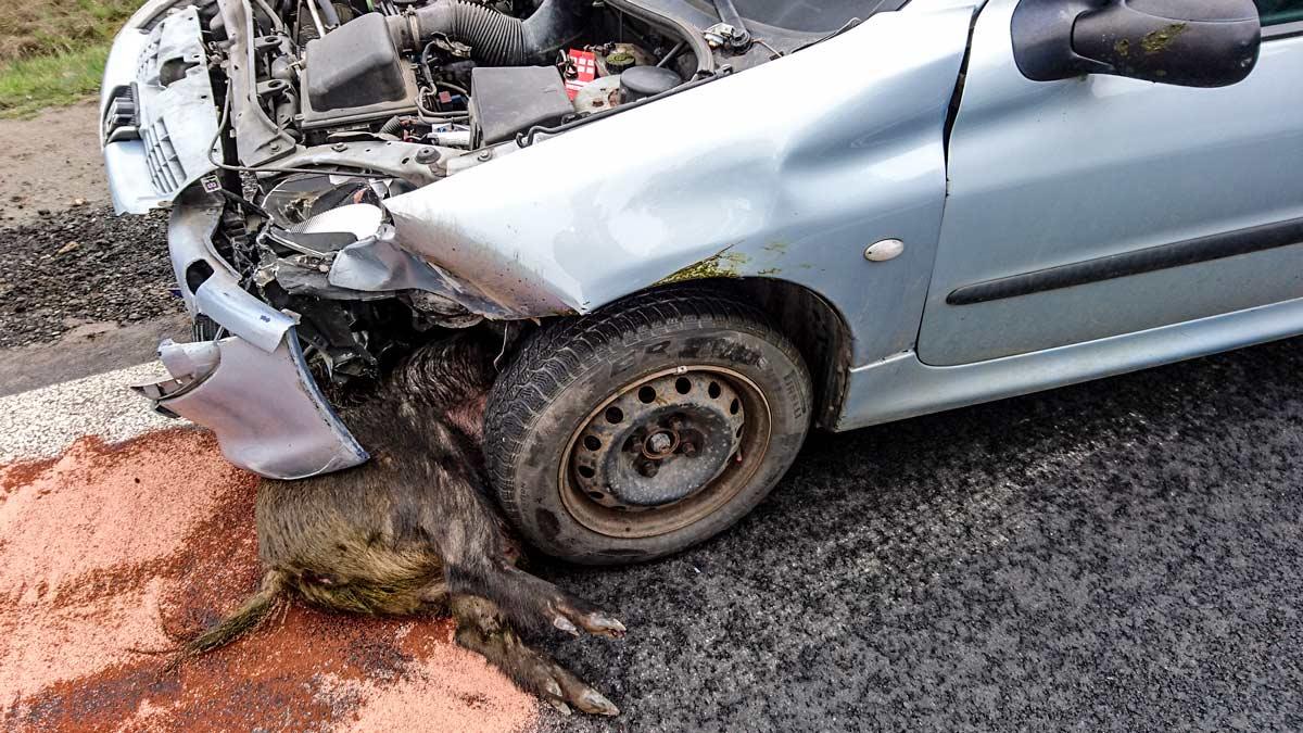 Una chica de 24 años choca contra un jabalí y resulta herida grave en Alicante