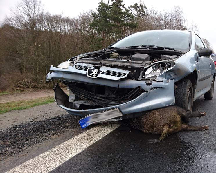 Imagen de un accidente con un jabalí en una carretera europea.