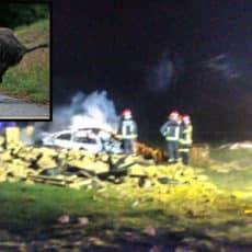 Muere calcinado en su coche tras atropellar a un jabalí en Palencia: deja mujer y dos hijas