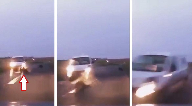 Graba cómo otro coche choca contra un jabalí y a punto está de provocar un terrible accidente