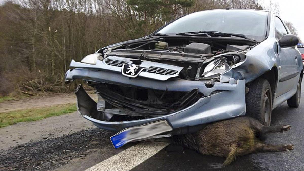Condenado a 4 meses de cárcel tras simular un accidente con un jabalí para cobrar el seguro