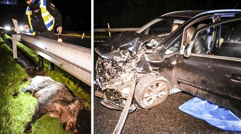 Dos jabalíes provocan un aparatoso accidente en Vigo