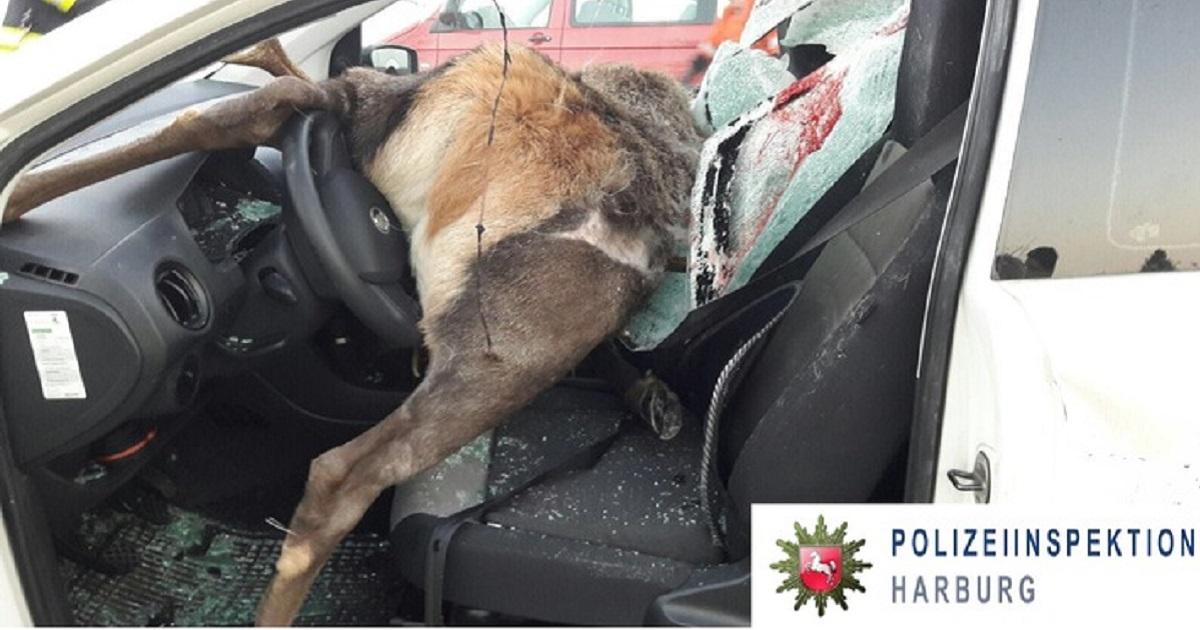 Un brutal accidente con un ciervo dispara las alarmas en Alemania