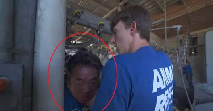 Un animalista, a punto de ser estrangulado por accidente en una granja de patos