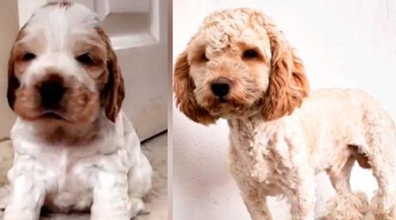 Adopta un perro de caza y cuando crece se da cuenta de que era de una raza equivocada