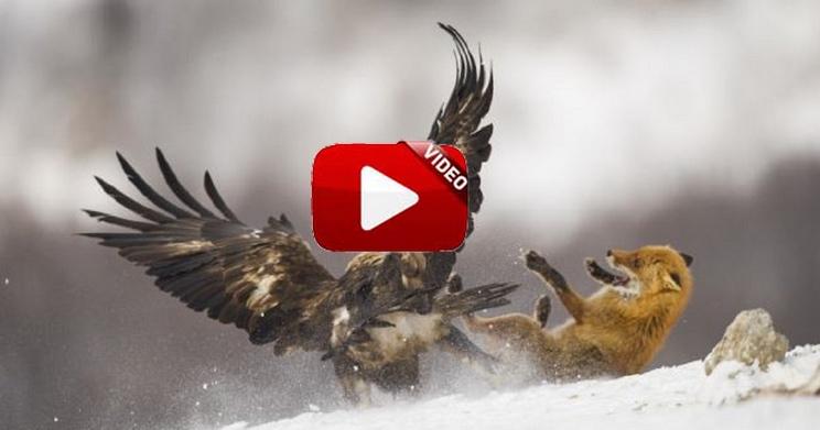 Este espectacular documental muestra cómo cazan zorros con águilas en Mongolia