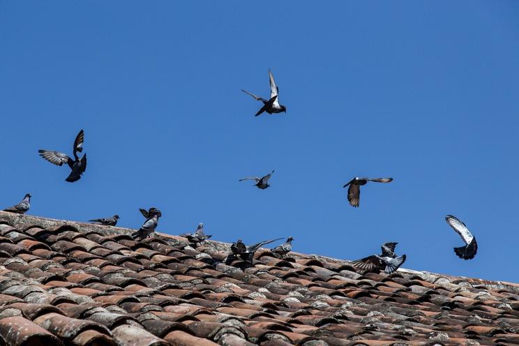 ahuyentar palomas3
