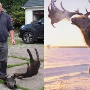 Dos pescadores encuentran la cuerna de un ciervo extinguido hace 10.000 años
