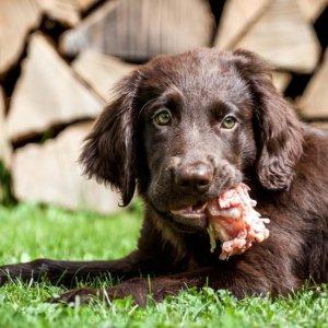 Nueve alimentos que nunca debes dar a tu perro... por mucho que te lo pida