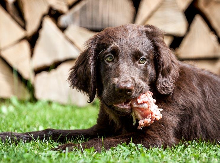 Nueve alimentos que nunca debes dar a tu perro… por mucho que te lo pida