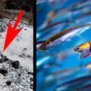 ¿Por qué han aparecido miles de anchoas varadas en las playas de Guipúzcoa?