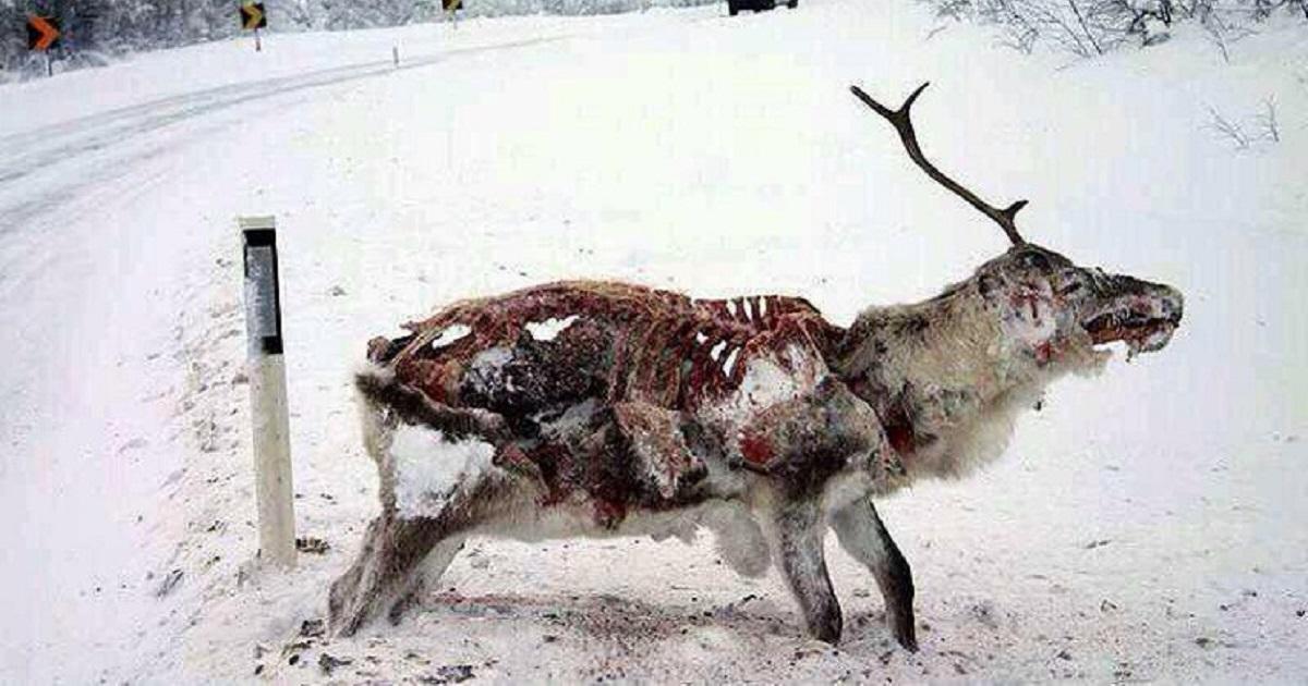Siete animales que quedaron atrapados en medio del hielo