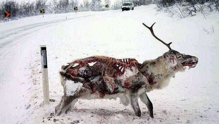 animales congelados cervido devorado