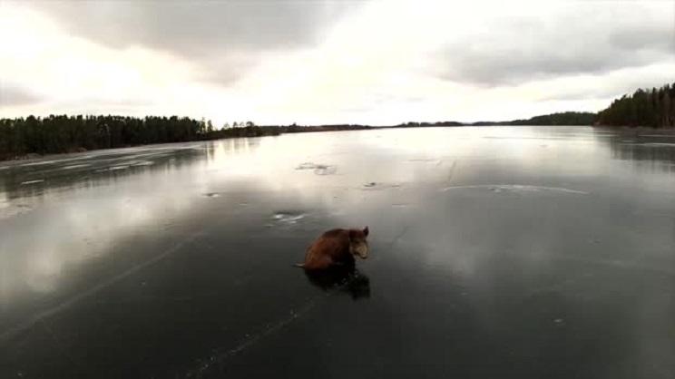 animales congelados jabalí