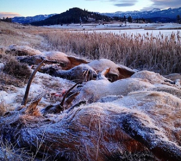 animales congelados manada ciervos