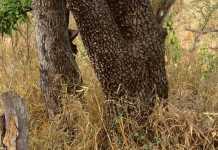 Diez animales ocultos que pondrán a prueba tu vista de cazador (II)