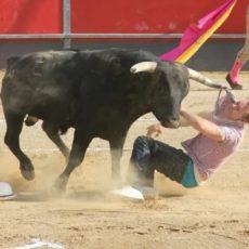 Un animalista se tira al ruedo para comprobar si un novillo era inofensivo y éste lo cornea