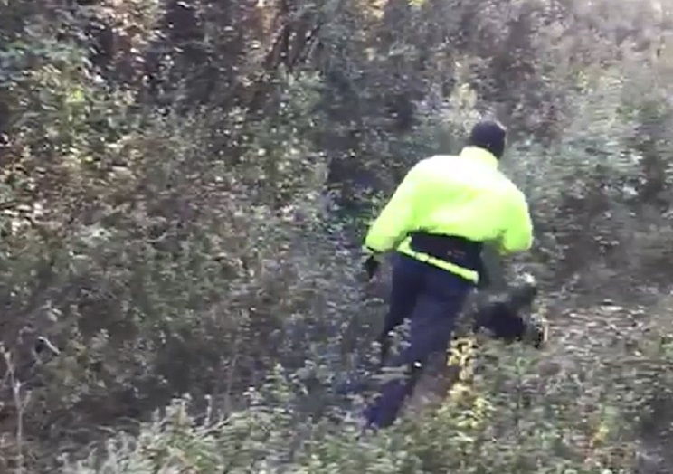 animalista amenazada cazadores