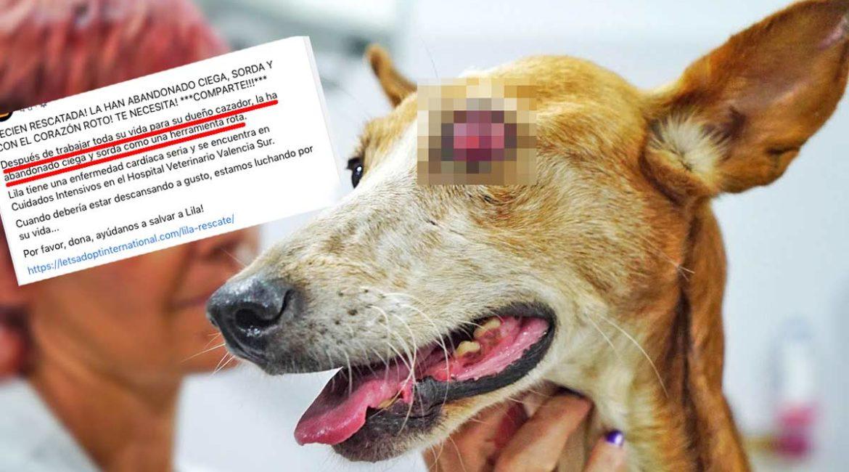 El animalista acusado de estafar 700.000 euros atacaba así a la caza para conseguir dinero