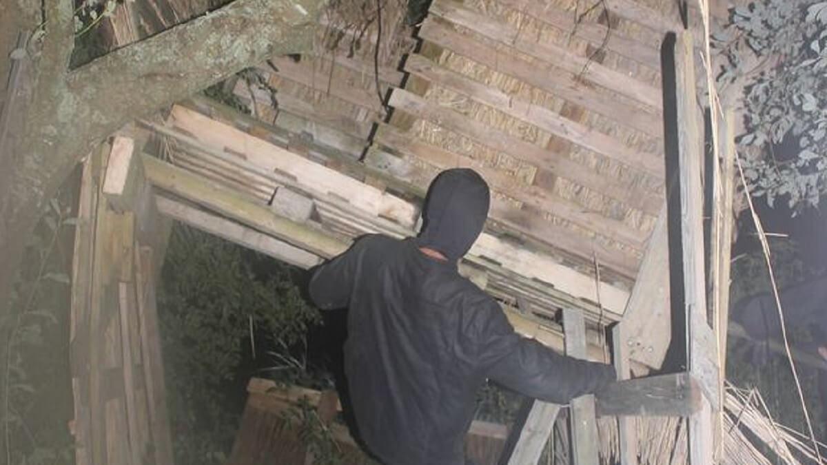 Animalistas se fotografían destrozando puestos de caza de jabalí y lo publican con total impunidad
