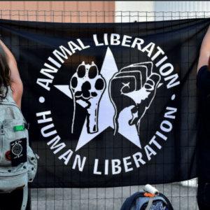 Francia condena a prisión a dos animalistas veganos por atacar carnicerías