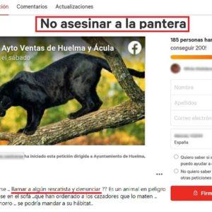 Así pretenden los animalistas atrapar a la pantera: recogiendo firmas o llamando a un rescatista